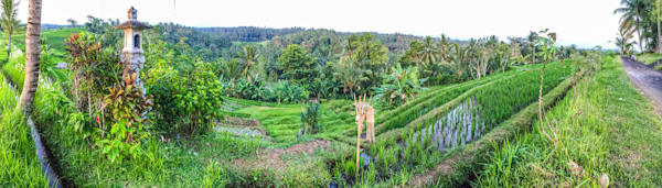 Bali Rice Field II | Tropical Landscape Photography Print
