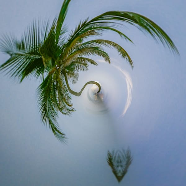 Palm Tree III | Tiny Planet Art Photography