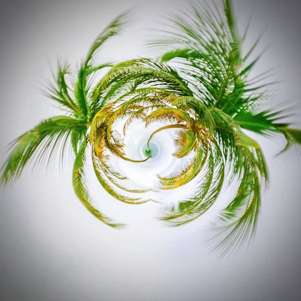 Palm Tree Tiny Planet | Tiny Planet Art Photography