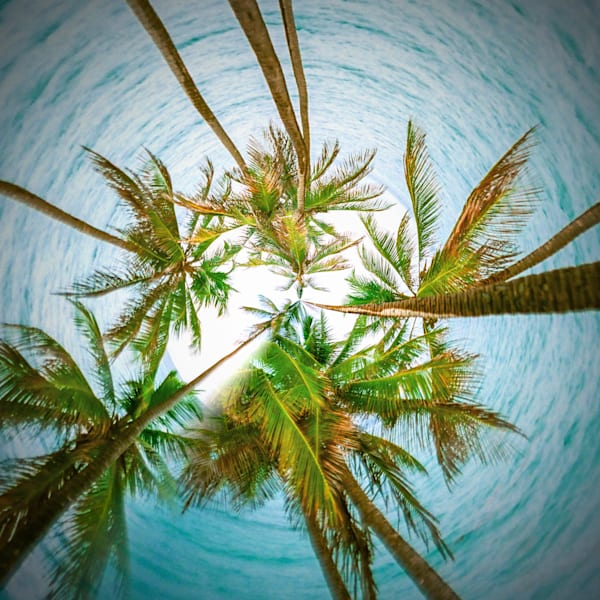 Palm Tree IV | Tiny Planet Art Photography