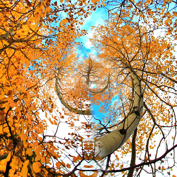 Golden Aspen Trees | Tiny Planet Art Photography