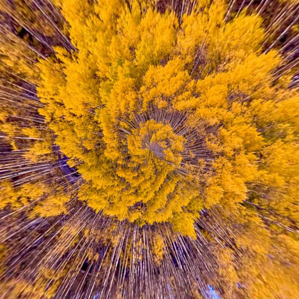 Golden Aspens Sprial | Tiny Planet Art Photography