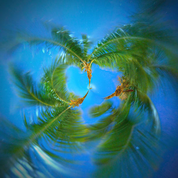 Midnight Palm Trees | Tiny Planet Art Photography