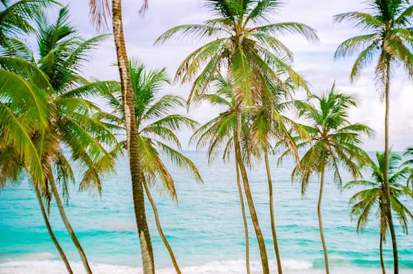 Barbados Palms | Tropical Landscape Photography Print