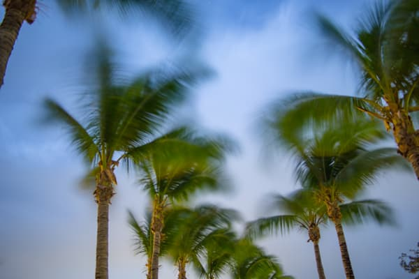 Midnight Palm Breezes | Tropical Landscape Photography Print