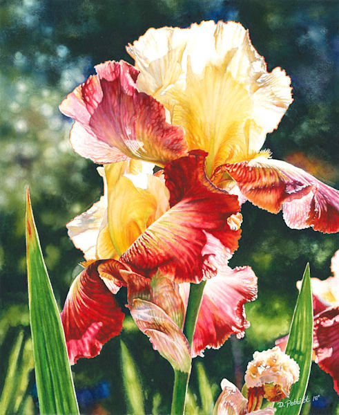 Elegance Iris Original watercolor painting. Various print sizes and options available.