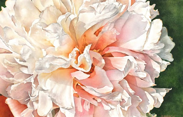 Moon River Peony Fine Art Watercolor Print. Canvas wraps available