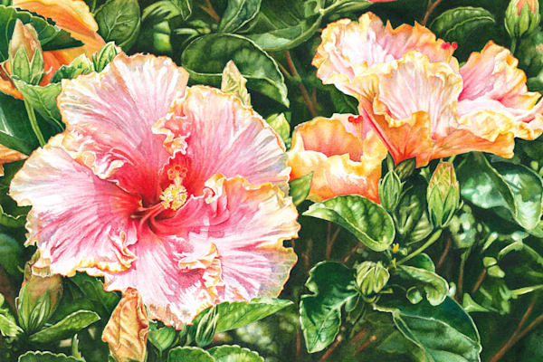 Harmony Hibiscus Original Watercolor Painting. Prints and Canvas wraps available.