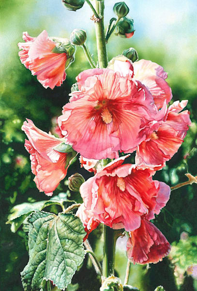 Halo Hollyhock Watercolor Art Print