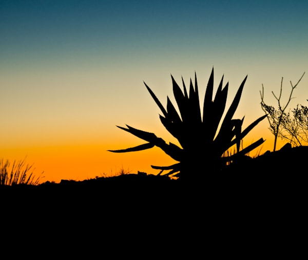 Desert Gradient Silhouette | Sunset Photography Print