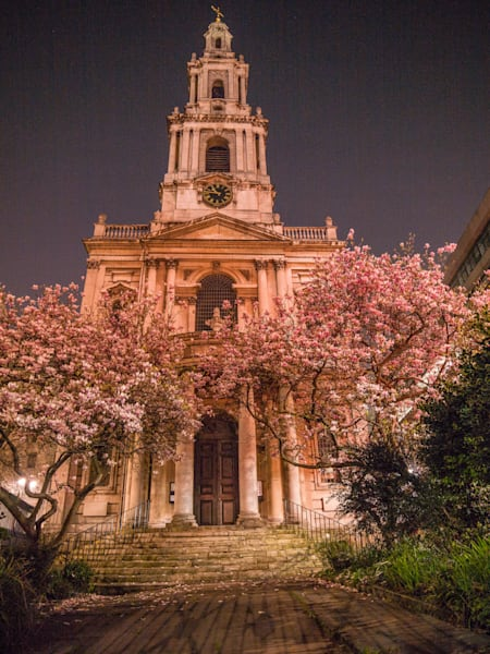 St Mary Le Strand Magnolias | London Art Photography Print