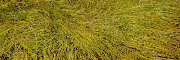 Grass Study Photography Art | Scott Cordner Photography