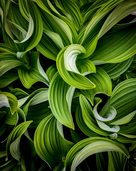 Untitled #8 Photography Art | Scott Cordner Photography