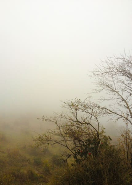 Into The Fog Photography Print | Gifts For Art Lovers