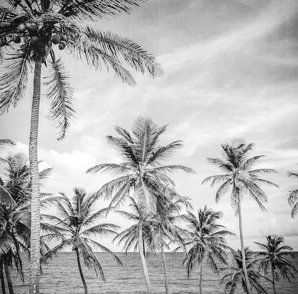 Barbados Palm Trees | Black and White Landscape Photography