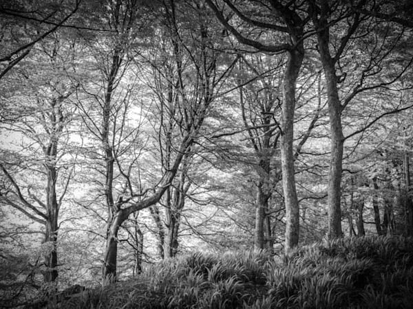 West Ireland Forest | Black and White Landscape Photography