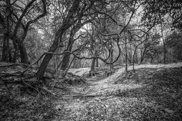Forrest Twist | Black and White Landscape Photography