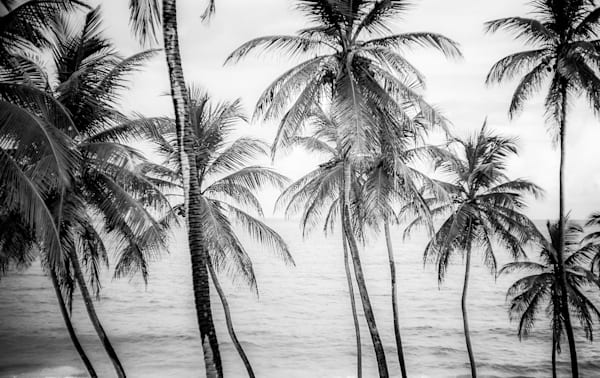 Barbados Monochromatic Palms | Black and White Landscape Photography