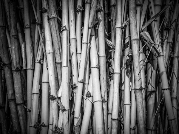 Thai Bamboo | Black and White Landscape Photography