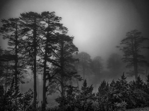 Bhutan Forest in Fog | Black and White Landscape Photography