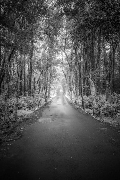 Mauritius Tree Road | Black and White Landscape Photography