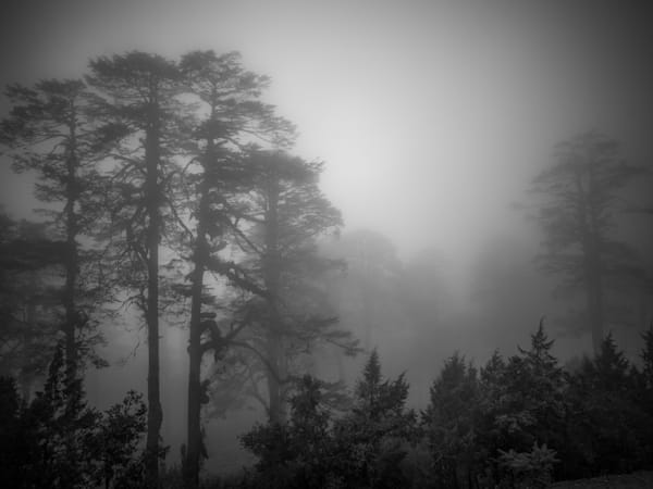 Bhutan Forest in Fog   Black and White Landscape Photography