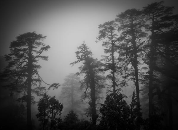 Foggy Bhutan Forest   Black and White Landscape Photography