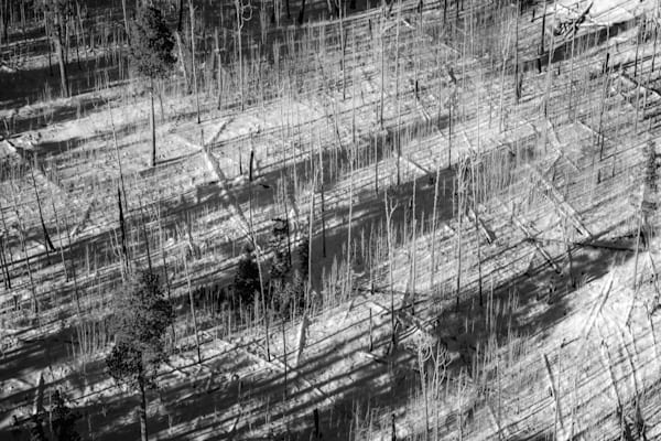 Fallen Canyon Timbers | Black and White Landscape Photography