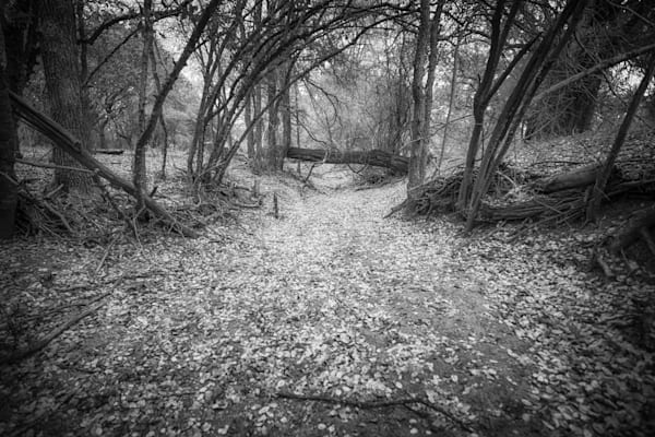 Autumn Trees In Texas   Black and White Landscape Photography