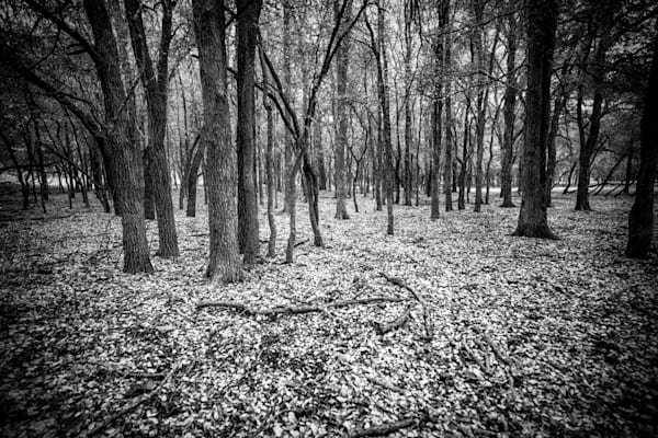 Lone Star Autumn   Black and White Landscape Photography