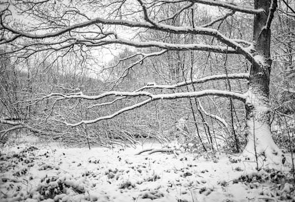 Gothic Branches | Black and White London Photography
