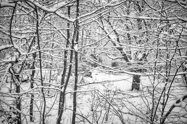 Snowy Hampstead Thicket   Black and White London Photography