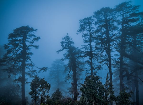 Bhutan Misty Trees | Nature Art Photography