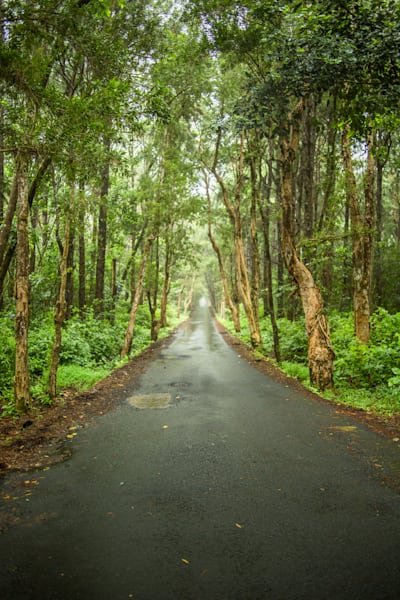Tree Lined Mauritius Road | Nature Art Photography