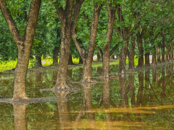 Pecan Orchard Reflection II | Southwest Art Photography Prints