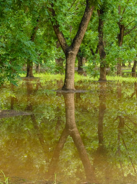 Pecan Tree Reflection | Southwest Art Photography Prints