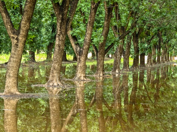 Pecan Orchard Reflection III  | Southwest Art Photography Prints