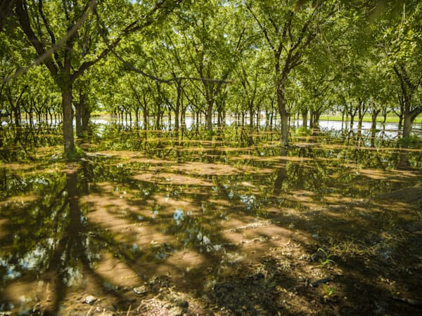 PECAN ORCHARD REFLECTION | Southwest Art Photography Prints