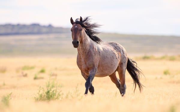 Open Range Mustang  5302 x 3314 J100ARGB