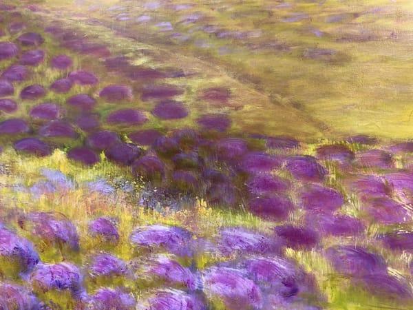 Lavender Fields VII