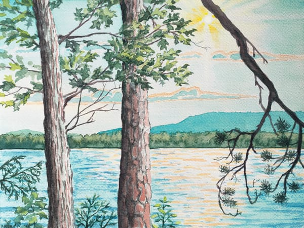 'Oak and Scotch Pine Trees' Art for Sale.