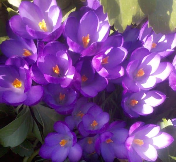Purple Photo Flowers