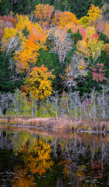 Vt Fall Colors Photography Art | Gary Tobler Fine Art
