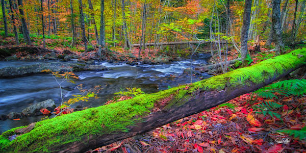 Moss Log Vt Photography Art | Gary Tobler Fine Art