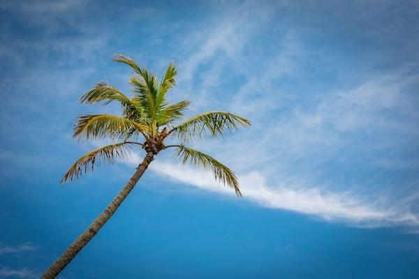 Standalone Palm
