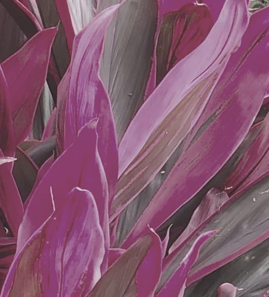 Plant Life- Moody Magenta