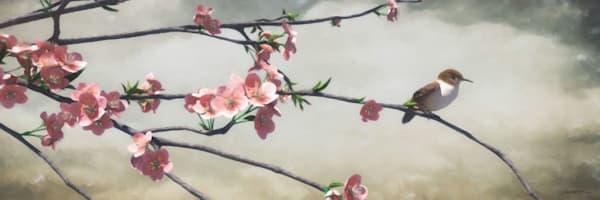 Apple Blossom   Cynthia Decker