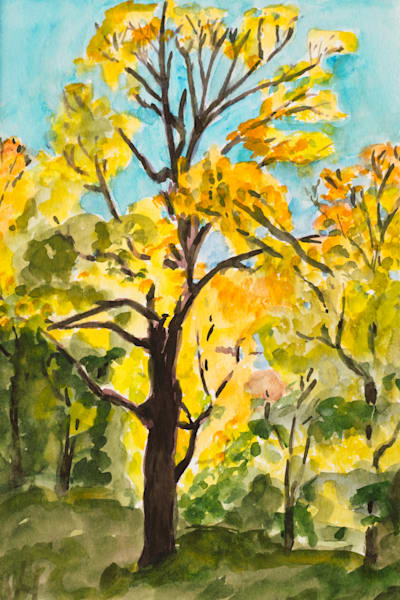 Yellow Maple Tree Art for Sale