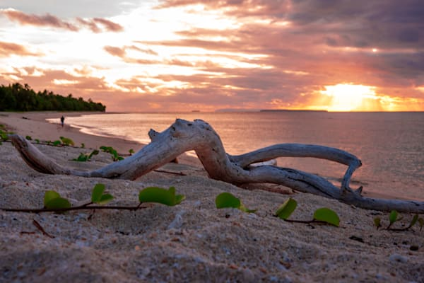 Driftwood on a beach at sunset is available as a fine art photograph for sale.