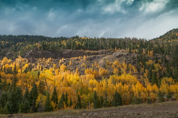Colorado Aspen Photography Art | Dale Yakaites Photography